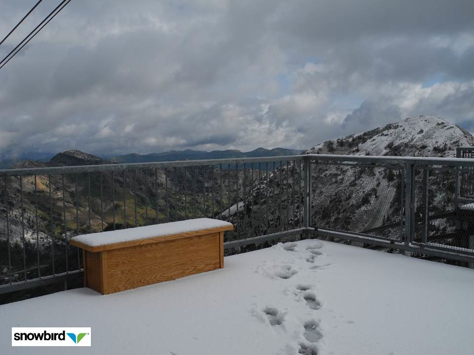 Snowbird Sees First Snow Of 2011