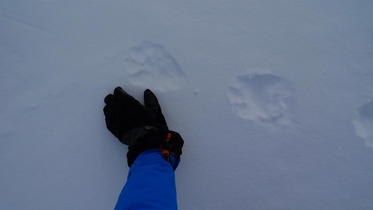 Tracks in Valdez