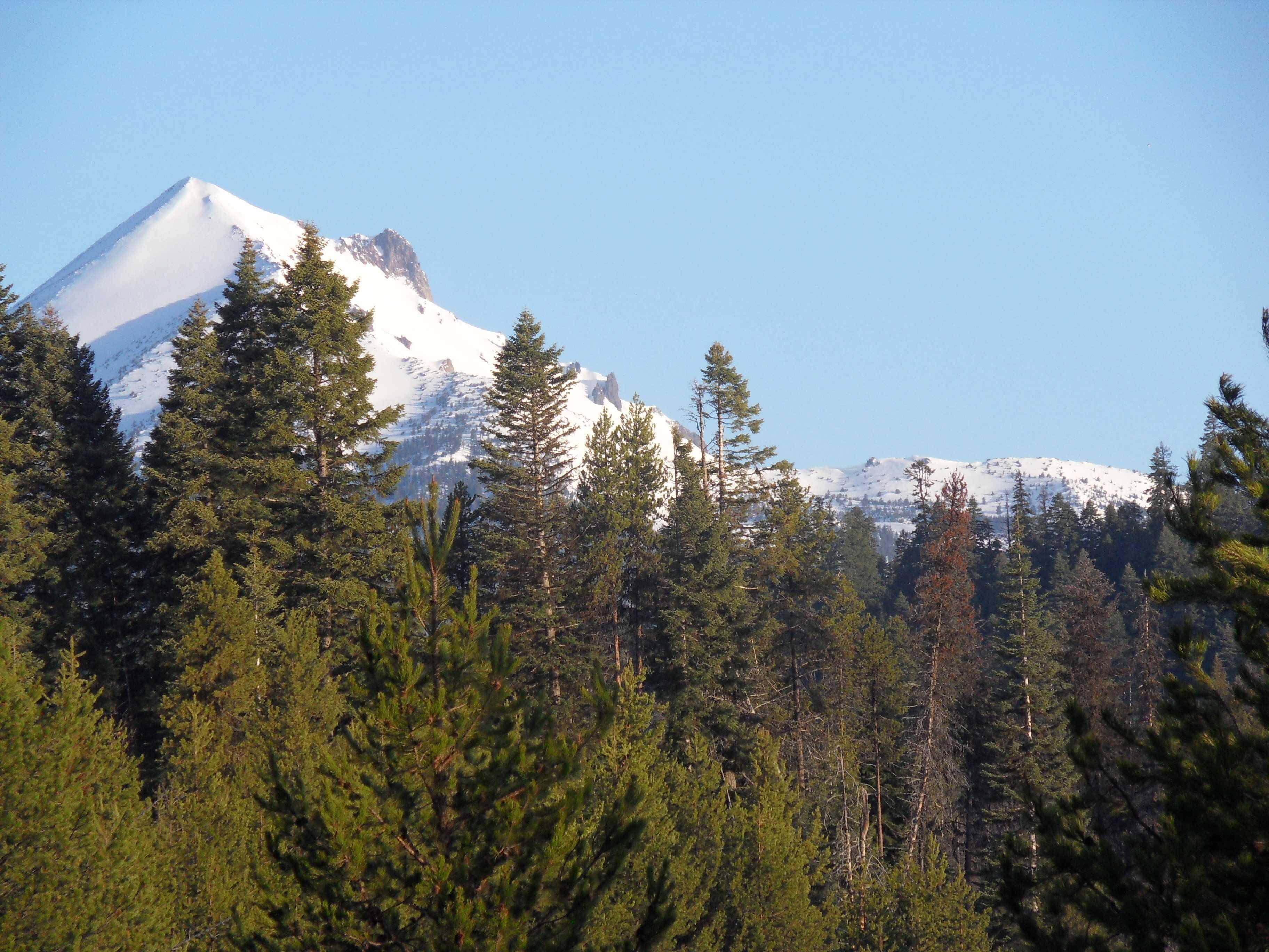Mount McLoughlin through the trees