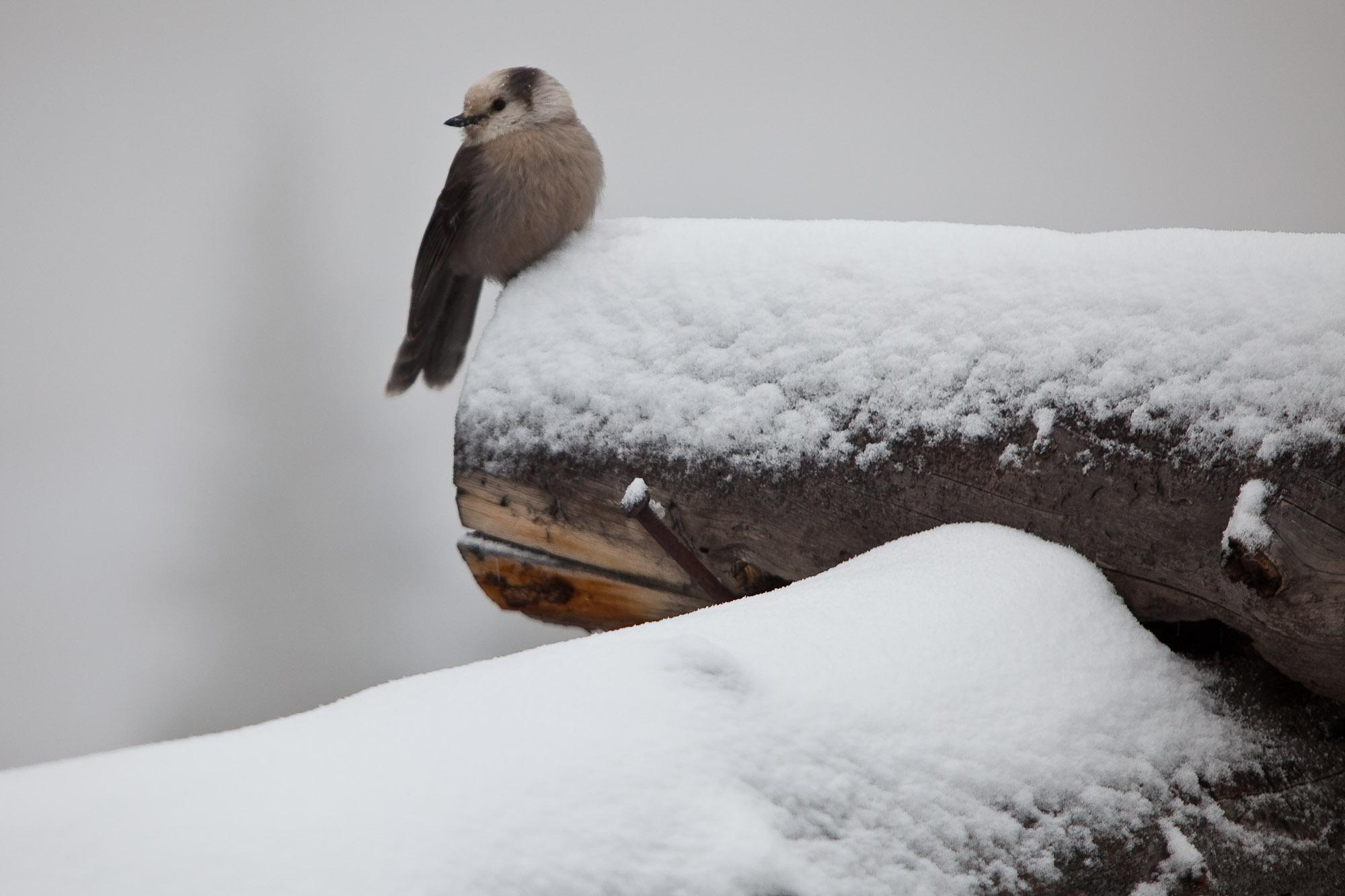 Bird in the snow at Aspen how quaint