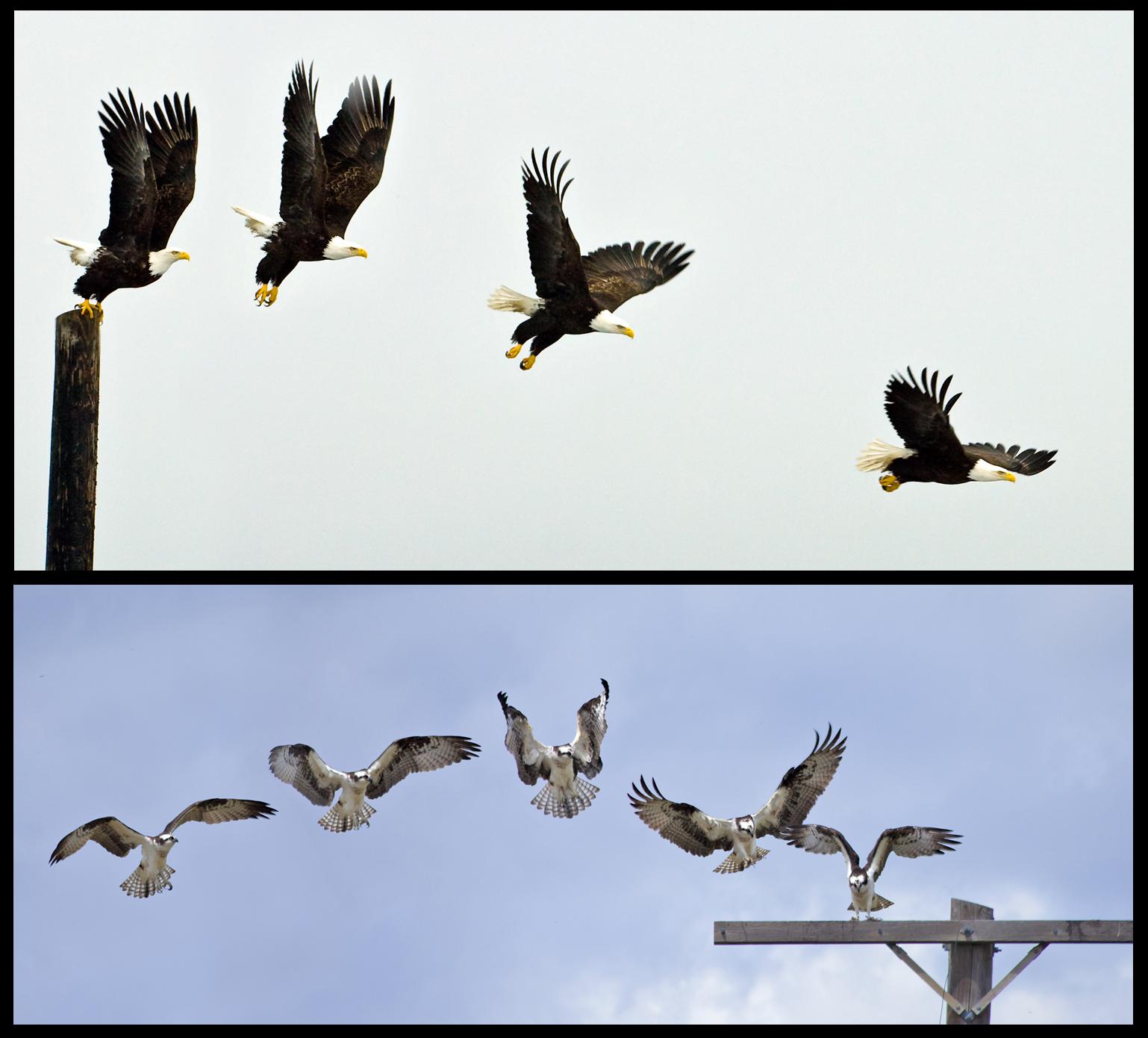 Eagle: Colton Stiffler Osprey: Patrick Clayton
