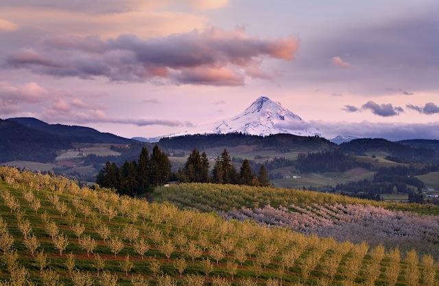 Oregon wine country.jpg