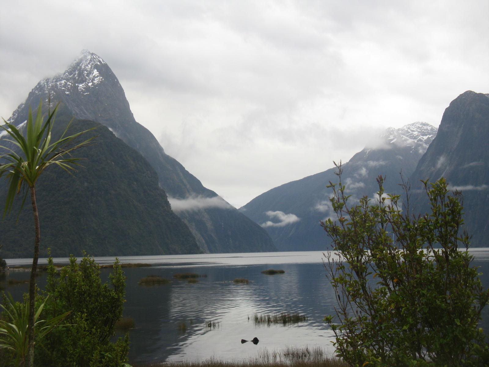 New Zealand Fjord