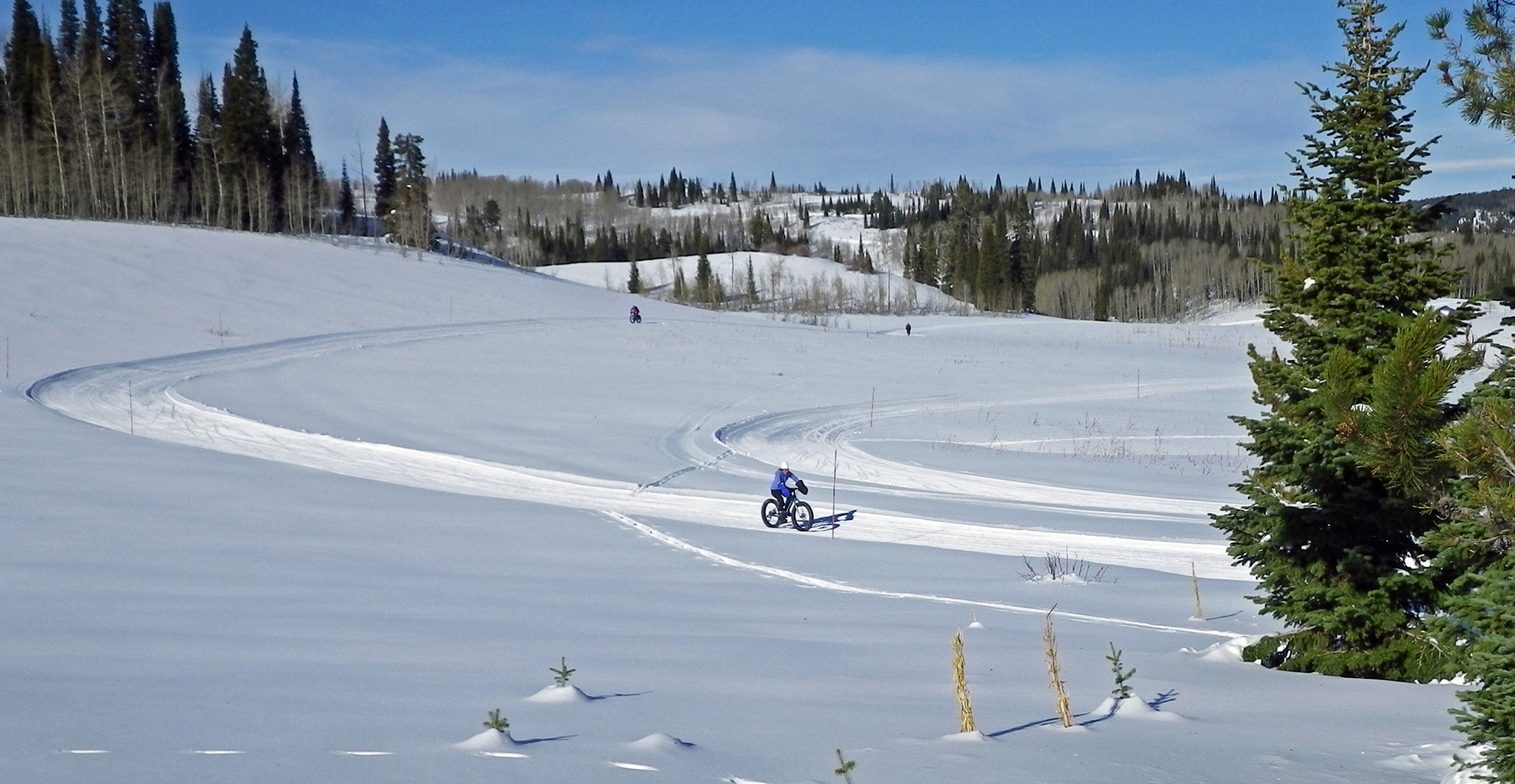 The Grand Targhee Fat Tire